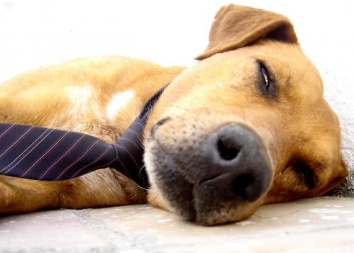피곤한 개.png